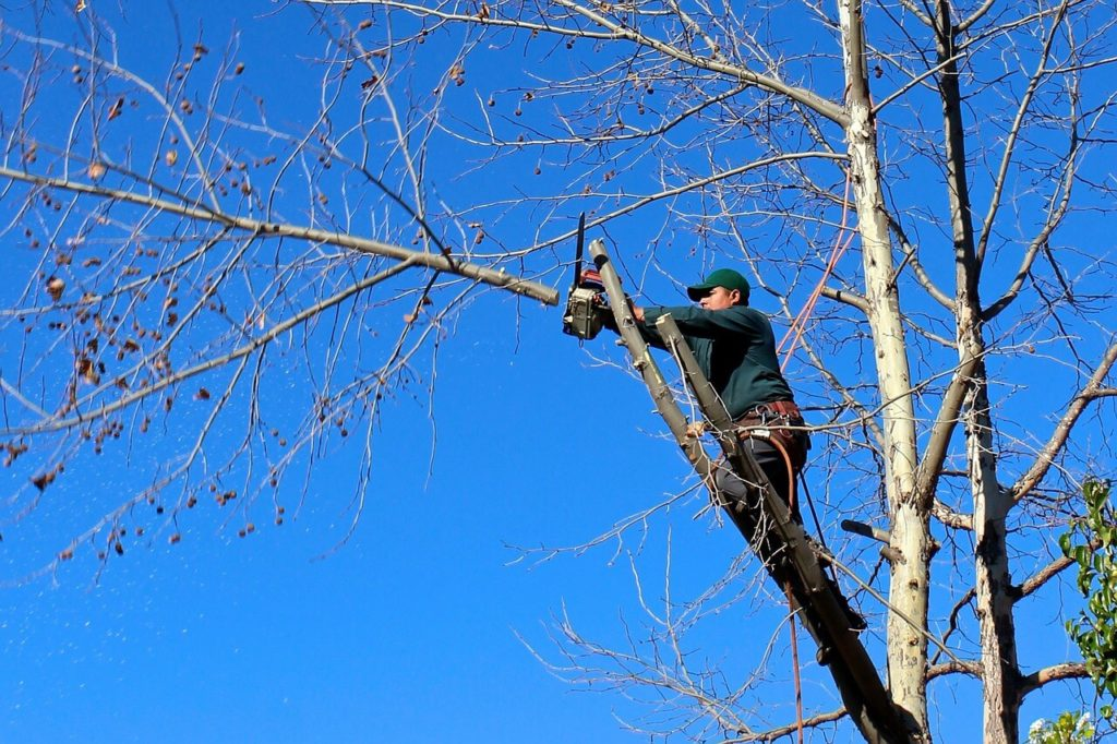Contact Us-Hialeah FL Tree Trimming and Stump Grinding Services-We Offer Tree Trimming Services, Tree Removal, Tree Pruning, Tree Cutting, Residential and Commercial Tree Trimming Services, Storm Damage, Emergency Tree Removal, Land Clearing, Tree Companies, Tree Care Service, Stump Grinding, and we're the Best Tree Trimming Company Near You Guaranteed!
