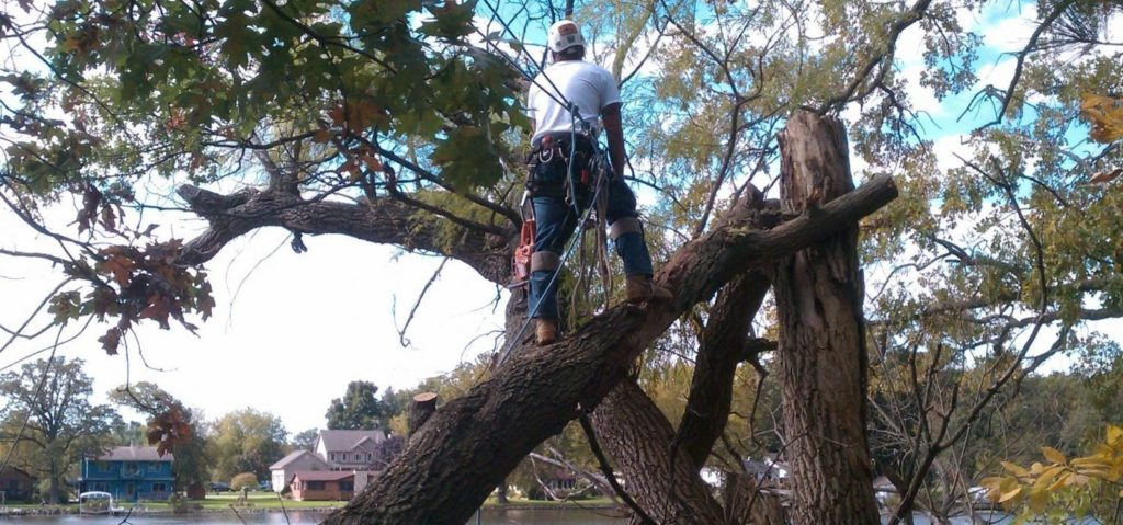Hialeah FL Tree Trimming and Stump Grinding Services Home Page Image-We Offer Tree Trimming Services, Tree Removal, Tree Pruning, Tree Cutting, Residential and Commercial Tree Trimming Services, Storm Damage, Emergency Tree Removal, Land Clearing, Tree Companies, Tree Care Service, Stump Grinding, and we're the Best Tree Trimming Company Near You Guaranteed!