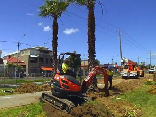Palm Tree Removal-Hialeah FL Tree Trimming and Stump Grinding Services-We Offer Tree Trimming Services, Tree Removal, Tree Pruning, Tree Cutting, Residential and Commercial Tree Trimming Services, Storm Damage, Emergency Tree Removal, Land Clearing, Tree Companies, Tree Care Service, Stump Grinding, and we're the Best Tree Trimming Company Near You Guaranteed!