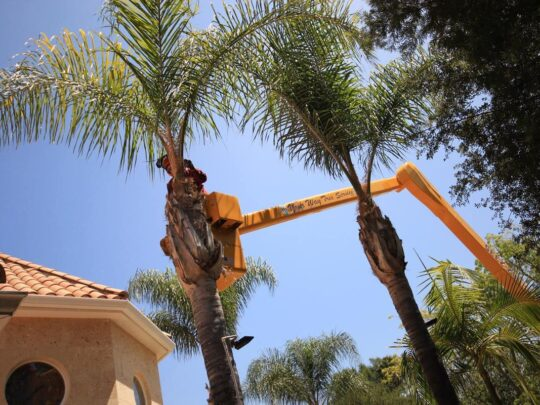 Palm Tree Trimming-Hialeah FL Tree Trimming and Stump Grinding Services-We Offer Tree Trimming Services, Tree Removal, Tree Pruning, Tree Cutting, Residential and Commercial Tree Trimming Services, Storm Damage, Emergency Tree Removal, Land Clearing, Tree Companies, Tree Care Service, Stump Grinding, and we're the Best Tree Trimming Company Near You Guaranteed!