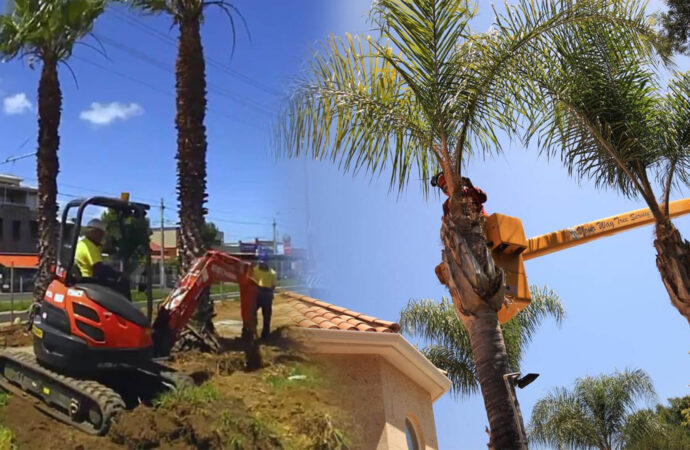Palm tree trimming & palm tree removal-Hialeah FL Tree Trimming and Stump Grinding Services-We Offer Tree Trimming Services, Tree Removal, Tree Pruning, Tree Cutting, Residential and Commercial Tree Trimming Services, Storm Damage, Emergency Tree Removal, Land Clearing, Tree Companies, Tree Care Service, Stump Grinding, and we're the Best Tree Trimming Company Near You Guaranteed!