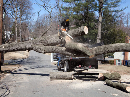 Residential Tree Services-Hialeah FL Tree Trimming and Stump Grinding Services-We Offer Tree Trimming Services, Tree Removal, Tree Pruning, Tree Cutting, Residential and Commercial Tree Trimming Services, Storm Damage, Emergency Tree Removal, Land Clearing, Tree Companies, Tree Care Service, Stump Grinding, and we're the Best Tree Trimming Company Near You Guaranteed!