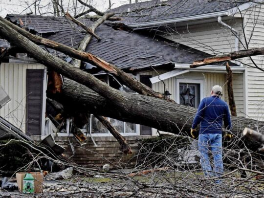 Storm Damage-Hialeah FL Tree Trimming and Stump Grinding Services-We Offer Tree Trimming Services, Tree Removal, Tree Pruning, Tree Cutting, Residential and Commercial Tree Trimming Services, Storm Damage, Emergency Tree Removal, Land Clearing, Tree Companies, Tree Care Service, Stump Grinding, and we're the Best Tree Trimming Company Near You Guaranteed!