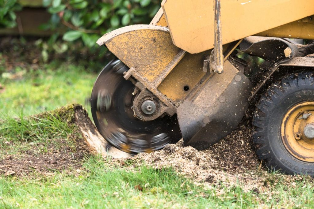 Stump Grinding-Hialeah FL Tree Trimming and Stump Grinding Services-We Offer Tree Trimming Services, Tree Removal, Tree Pruning, Tree Cutting, Residential and Commercial Tree Trimming Services, Storm Damage, Emergency Tree Removal, Land Clearing, Tree Companies, Tree Care Service, Stump Grinding, and we're the Best Tree Trimming Company Near You Guaranteed!
