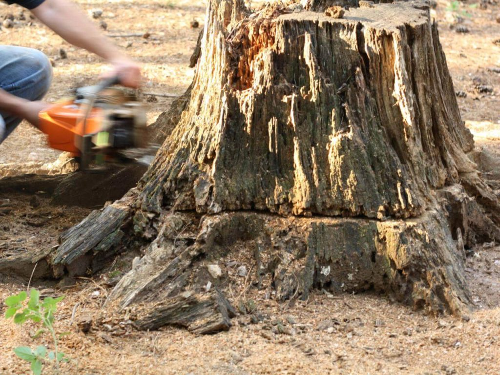 Stump Removal-Hialeah FL Tree Trimming and Stump Grinding Services-We Offer Tree Trimming Services, Tree Removal, Tree Pruning, Tree Cutting, Residential and Commercial Tree Trimming Services, Storm Damage, Emergency Tree Removal, Land Clearing, Tree Companies, Tree Care Service, Stump Grinding, and we're the Best Tree Trimming Company Near You Guaranteed!