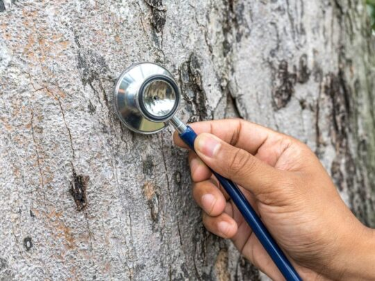 Tree Assessments-Hialeah FL Tree Trimming and Stump Grinding Services-We Offer Tree Trimming Services, Tree Removal, Tree Pruning, Tree Cutting, Residential and Commercial Tree Trimming Services, Storm Damage, Emergency Tree Removal, Land Clearing, Tree Companies, Tree Care Service, Stump Grinding, and we're the Best Tree Trimming Company Near You Guaranteed!