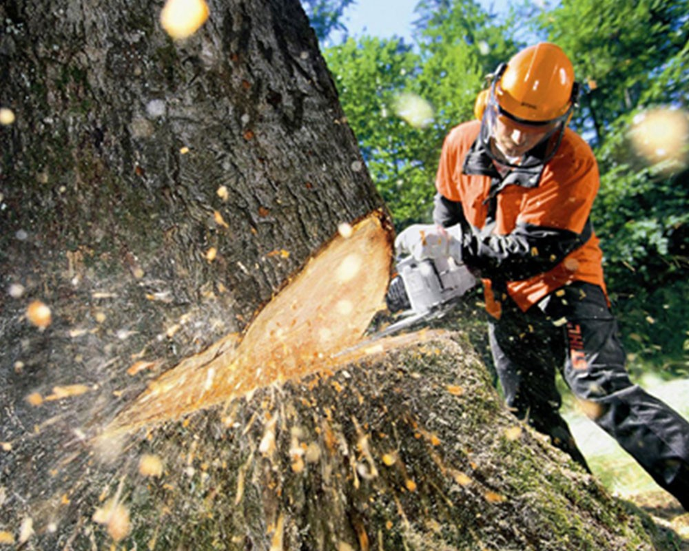 Tree Cutting-Hialeah FL Tree Trimming and Stump Grinding Services-We Offer Tree Trimming Services, Tree Removal, Tree Pruning, Tree Cutting, Residential and Commercial Tree Trimming Services, Storm Damage, Emergency Tree Removal, Land Clearing, Tree Companies, Tree Care Service, Stump Grinding, and we're the Best Tree Trimming Company Near You Guaranteed!