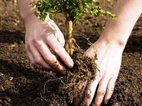 Tree Planting-Hialeah FL Tree Trimming and Stump Grinding Services-We Offer Tree Trimming Services, Tree Removal, Tree Pruning, Tree Cutting, Residential and Commercial Tree Trimming Services, Storm Damage, Emergency Tree Removal, Land Clearing, Tree Companies, Tree Care Service, Stump Grinding, and we're the Best Tree Trimming Company Near You Guaranteed!