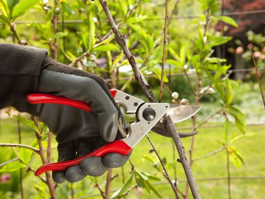 Tree Pruning-Hialeah FL Tree Trimming and Stump Grinding Services-We Offer Tree Trimming Services, Tree Removal, Tree Pruning, Tree Cutting, Residential and Commercial Tree Trimming Services, Storm Damage, Emergency Tree Removal, Land Clearing, Tree Companies, Tree Care Service, Stump Grinding, and we're the Best Tree Trimming Company Near You Guaranteed!