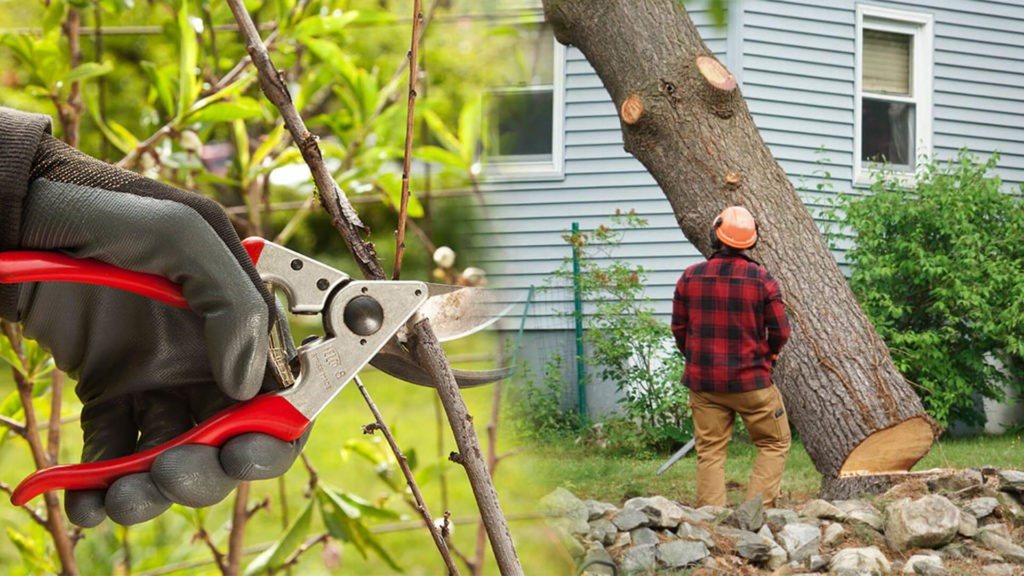 Tree pruning & tree removal-Hialeah FL Tree Trimming and Stump Grinding Services-We Offer Tree Trimming Services, Tree Removal, Tree Pruning, Tree Cutting, Residential and Commercial Tree Trimming Services, Storm Damage, Emergency Tree Removal, Land Clearing, Tree Companies, Tree Care Service, Stump Grinding, and we're the Best Tree Trimming Company Near You Guaranteed!